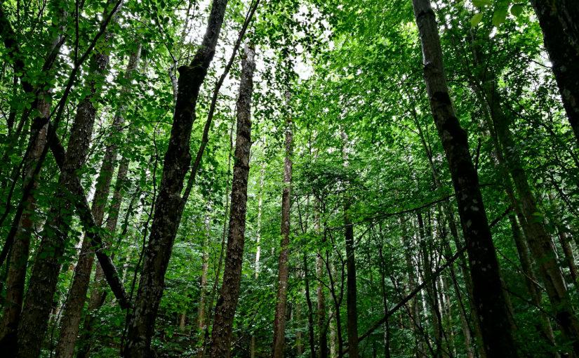 Het Bos- een playlist.